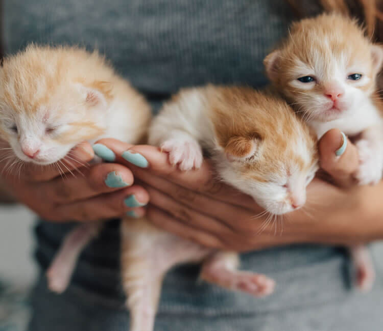 Young woman holding three newborn kittens in her arms
