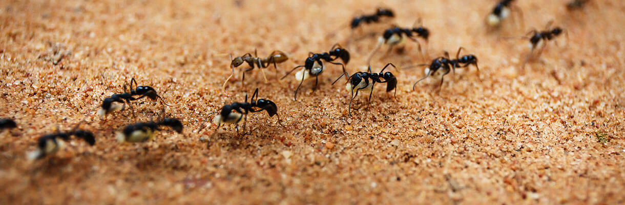 Several ants crawling on the sand