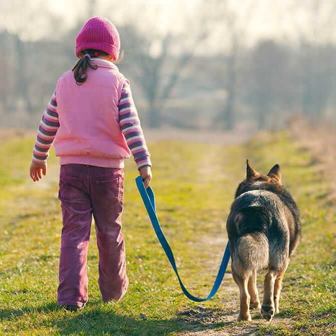 Little girl taking a German Shepherd for a walk on a lead in the countryside