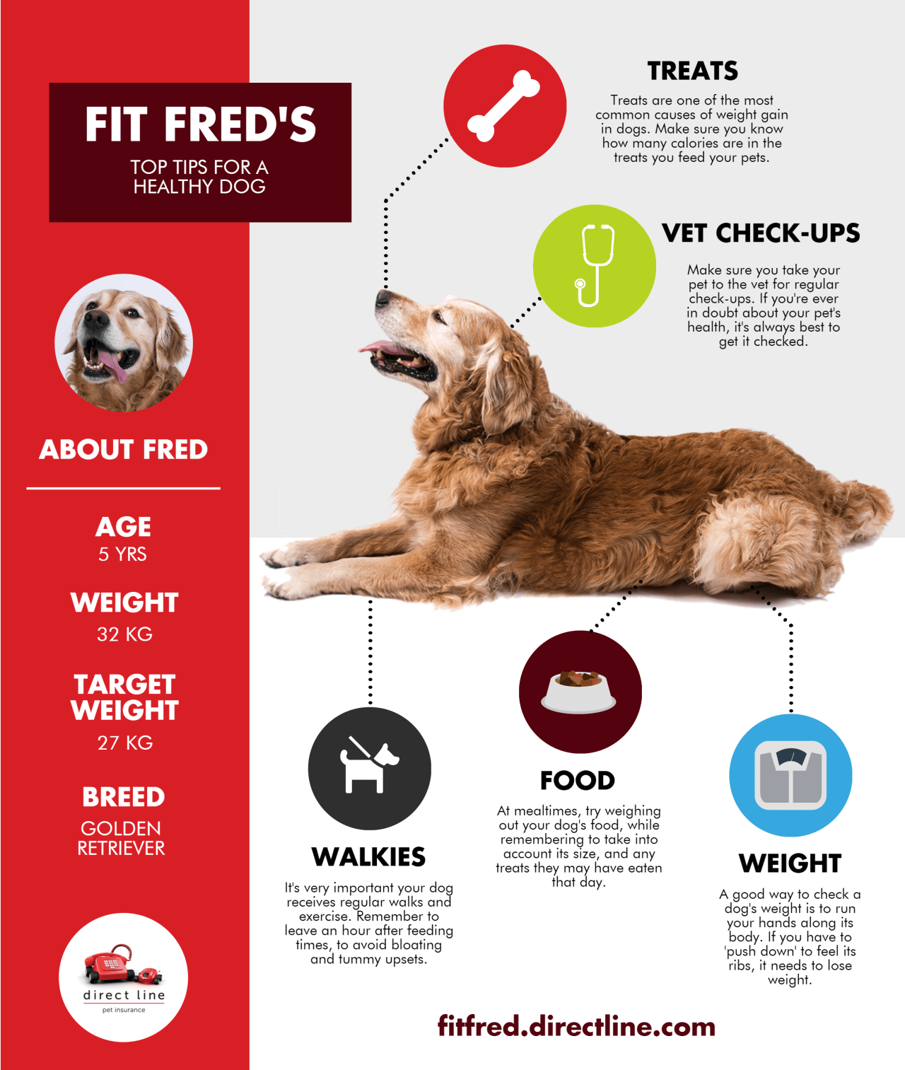 Top tips for a healthy dog infographic