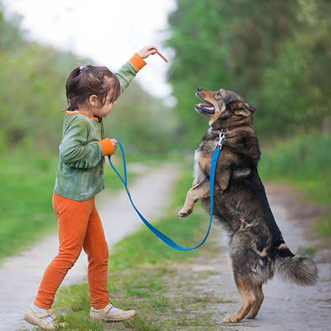 Child holding a treat out for a dog, who's jumping up to eat it