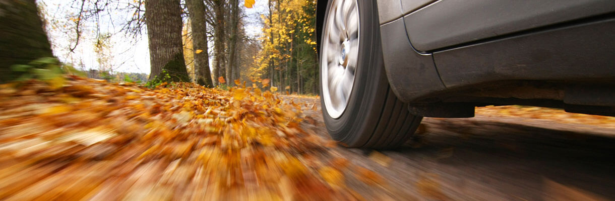 Car driving in Autumn along tree path