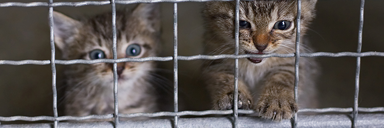 Two kittens behind a fence
