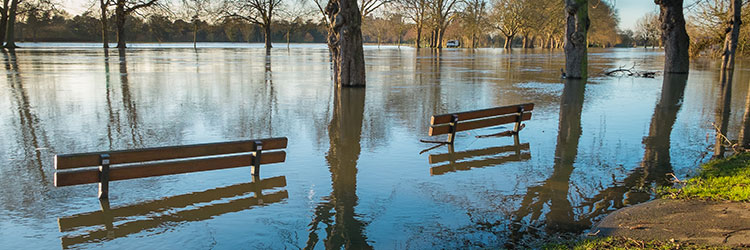 Flooded park benches by trees and a path