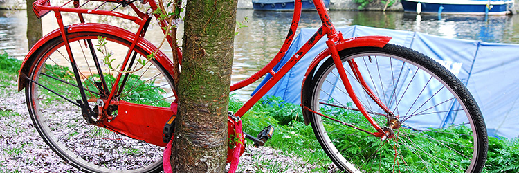 Red bike locked against tree by the river