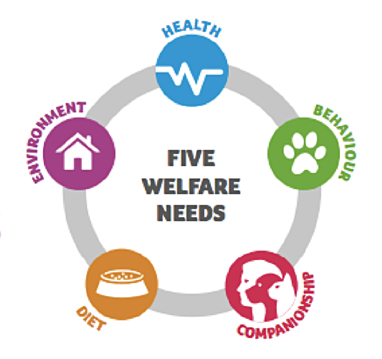 Graphic showing the five welfare needs of pets throughout their lives